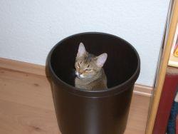 Die Katze ist im Eimer