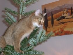 Ich helfe beim Weihnachtsbaum schmücken